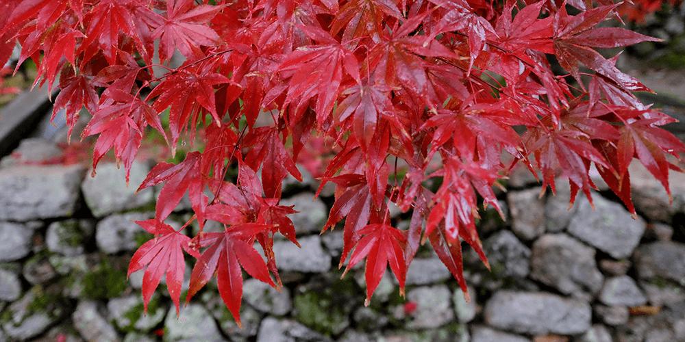 【京都】秋の古都、紅葉とグルメ 高速バスで0泊3日の旅