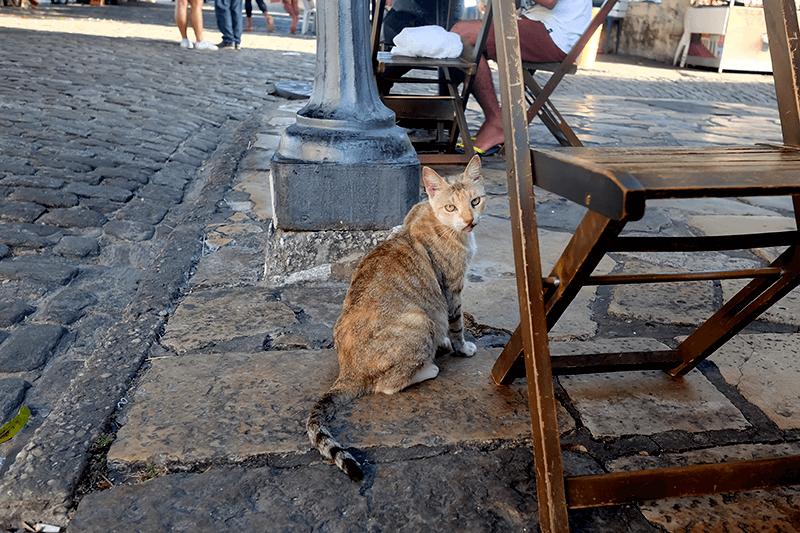 サンルイスで猫に出会う