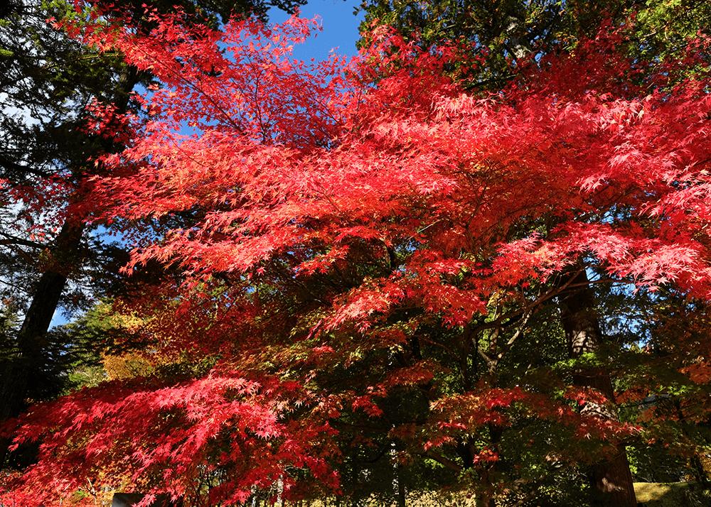 日光田母沢御用邸記念公園(NIKKO TAMOZAWA imperial villa memorial park)駐車場から道路を渡って、一番近い入り口から入りました(正門のほうが遠い)