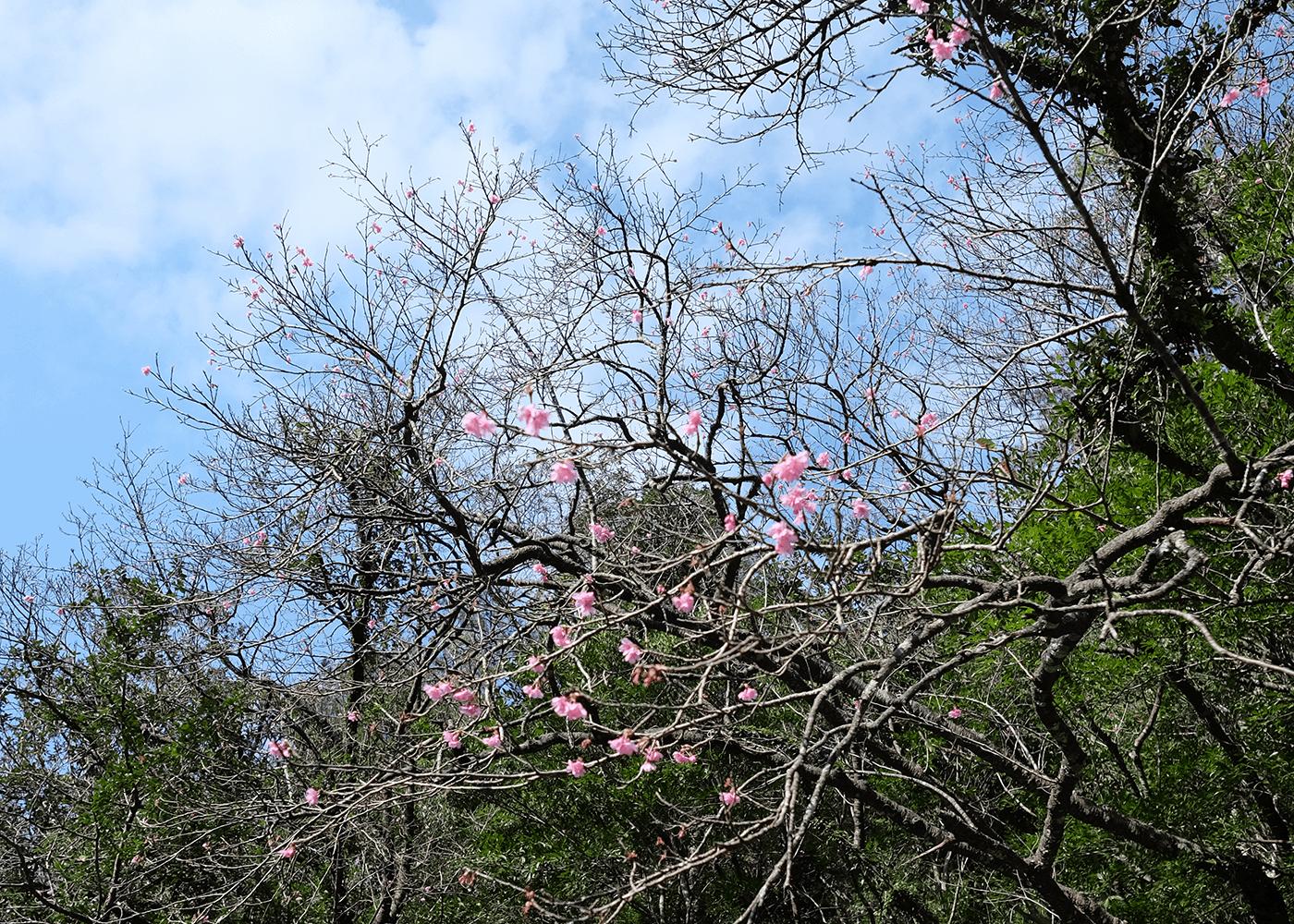 比地大滝(ヒジオオタキ)