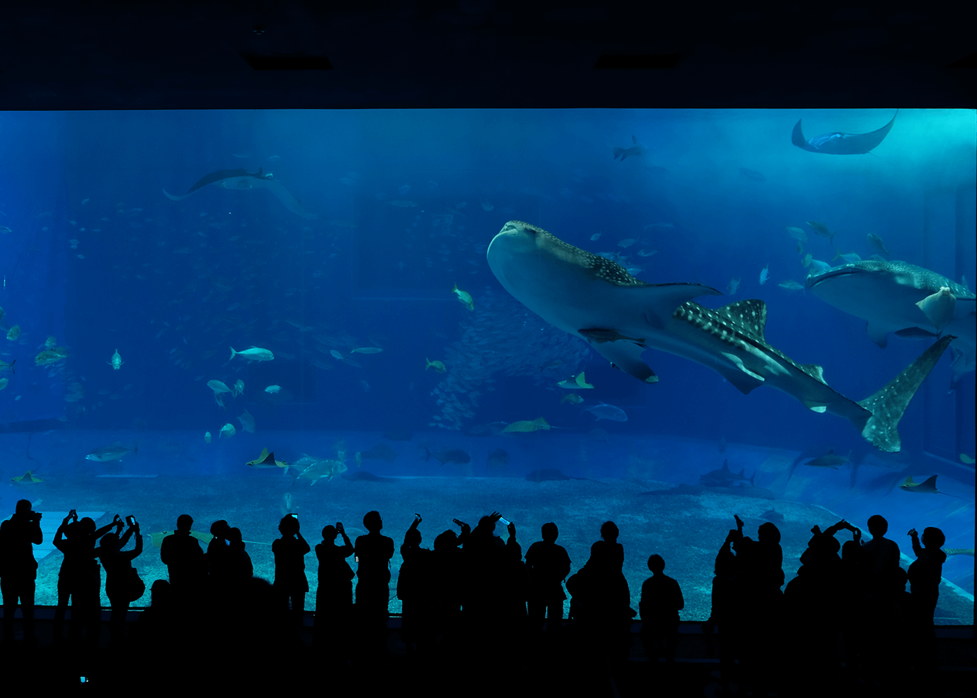 沖縄美ら海水族館(Okinawa Churaumi Aquarium)