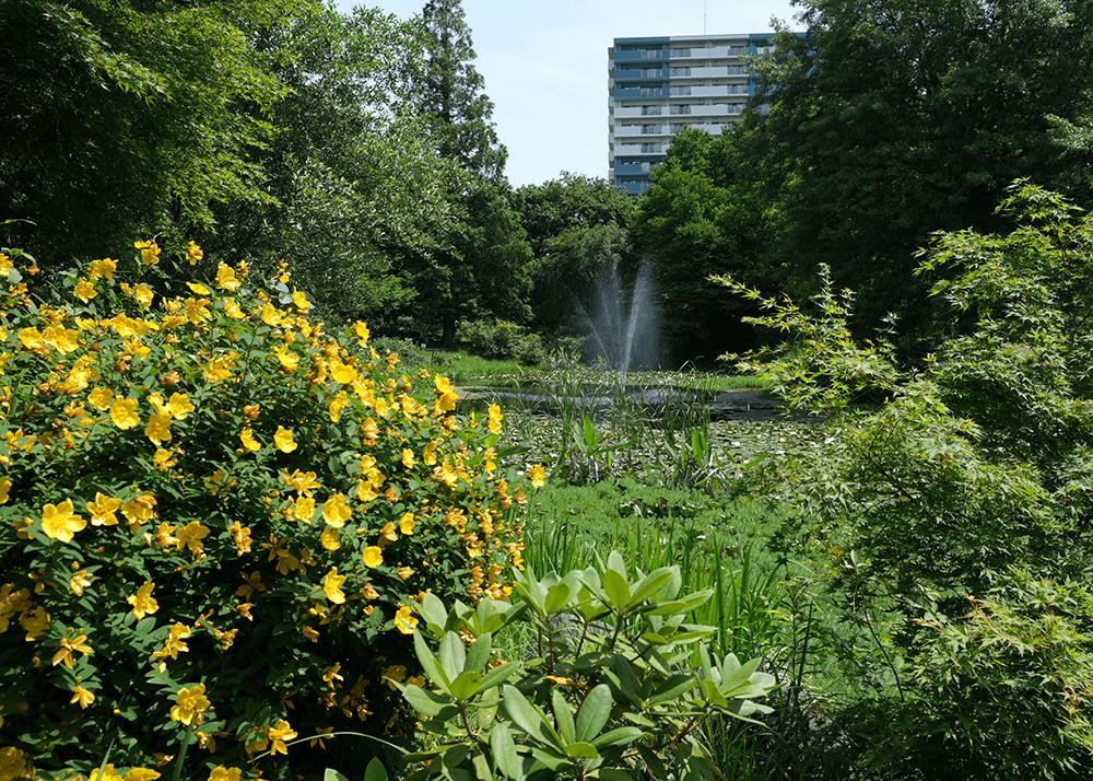 京成バラ園(Keisei Rose Garden)